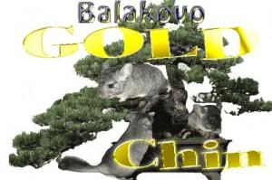 Питомник Balakovo Gold Chin