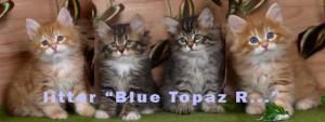 Питомник Голубой топаз (Blue Topaz)