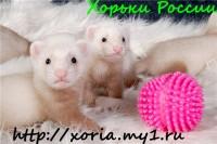 Заводчики Борзуновы Максим и Ольга