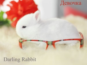 Питомник Darling Rabbit