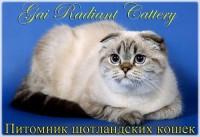 Питомник Gai Radiant Cattery