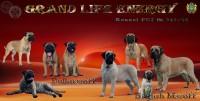 Питомник Grand Life Energy