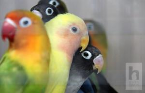Питомник Happy Birds
