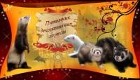 """Питомник """"Из Дома Королевой"""" (хорьки)"""