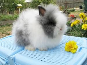 """Хозяйство карликовых кроликов """"Ля-Кроля"""""""