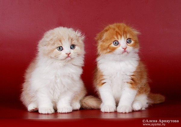 Если у кошек пупок - 3f