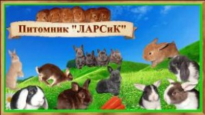 Питомник ЛАРСиК