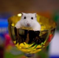 Питомник Lucky Hamster