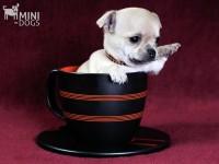 Клуб Mini-Dogs