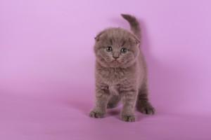 Питомник Moon Cat