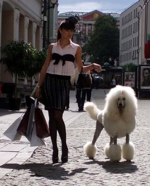 Выставки собак в ставрополе ноябрь
