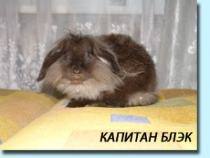 """Питомник """"Московский кролик"""""""