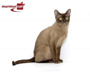 Питомник Murmurcat