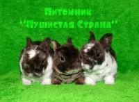 """Питомник """"Пушистая Страна"""""""