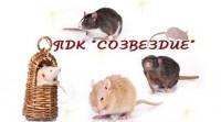 """Питомник декоративного крысоводства """"Созвездие"""""""