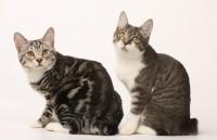 Специализация: все породы кошек.