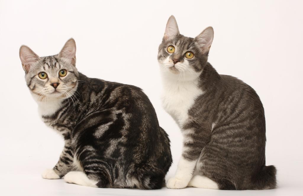Клуб любителей кошек созвездие