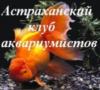 """Астраханский клуб аквариумистов """"Золотая Оранда"""""""